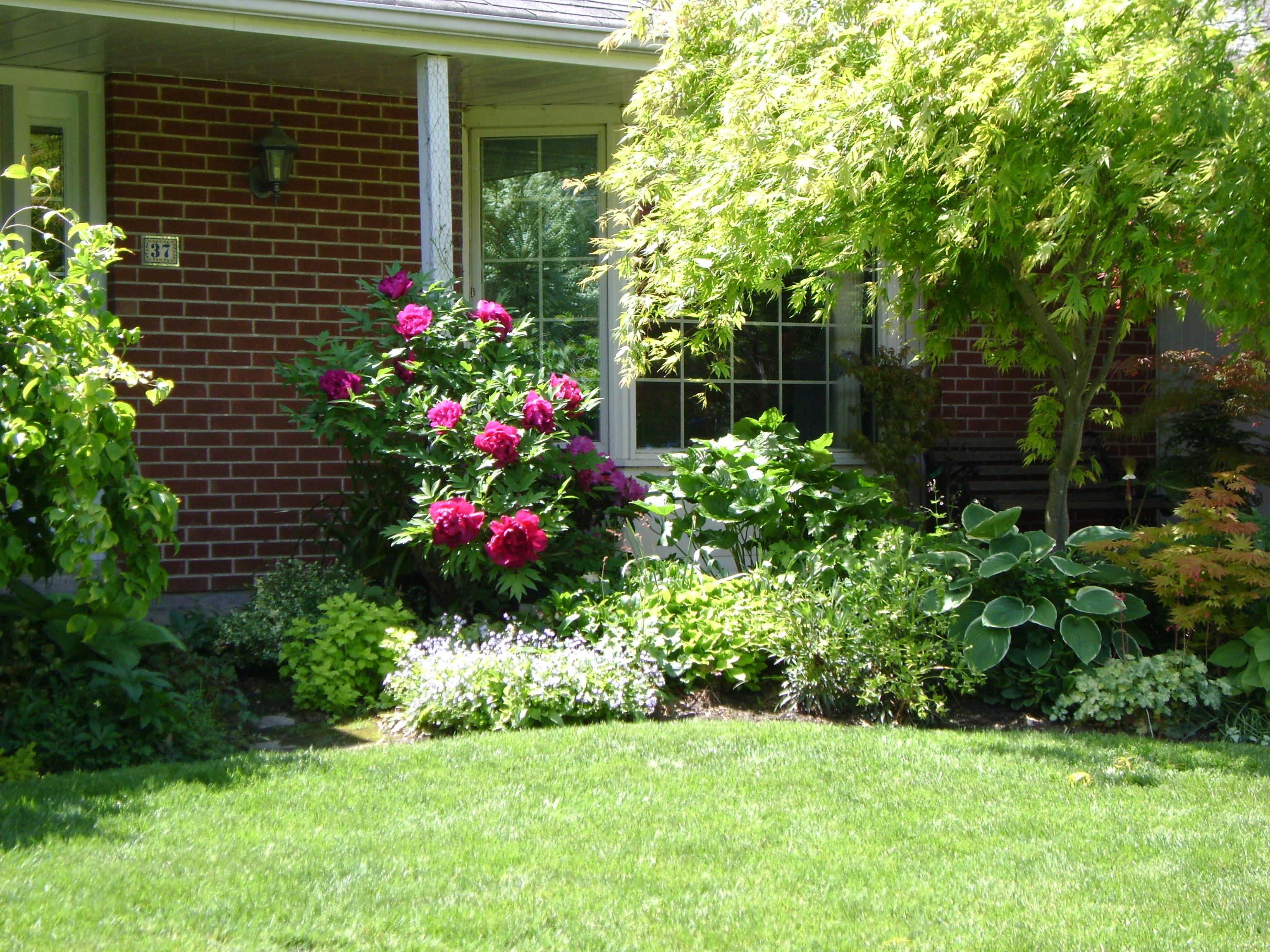 Tree peony green theatre for Landscape my garden