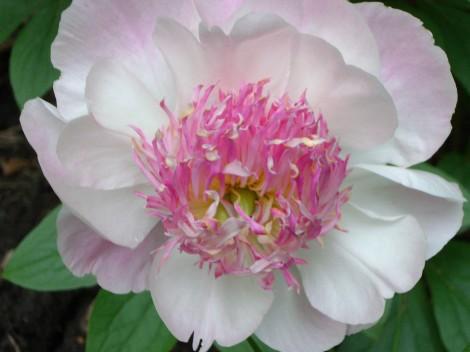 gardenjune09 060