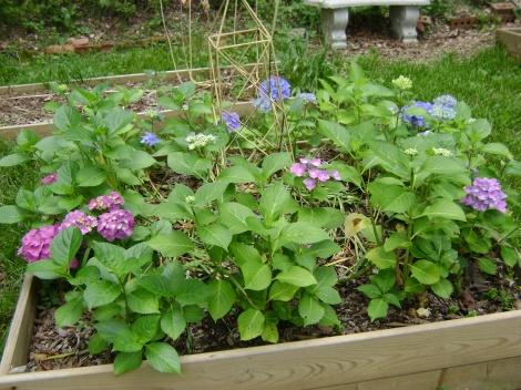 gardenAug09 050