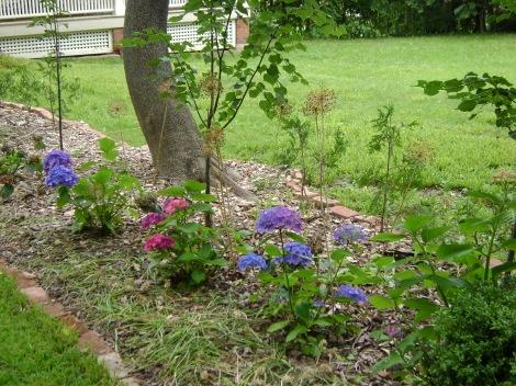 gardenAug09 058