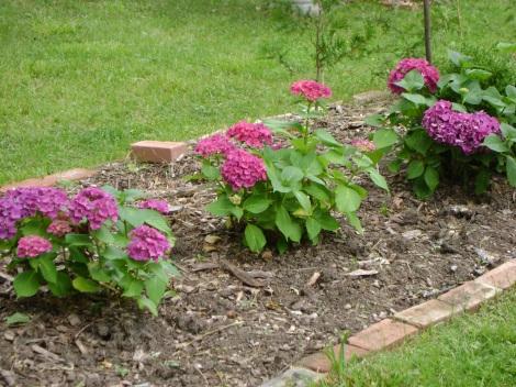 gardenAug09 062