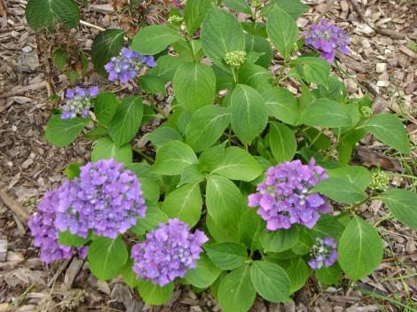 gardenAug09 064
