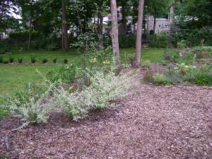gardenAug09 118