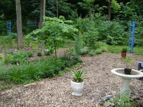 gardenAug09 120