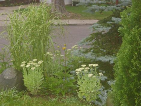 gardenAug09 124