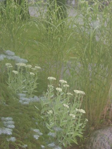 gardenAug09 125