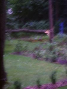 gardenAug09 134