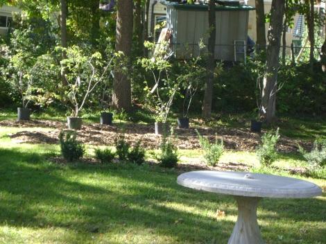gardenSept09 073