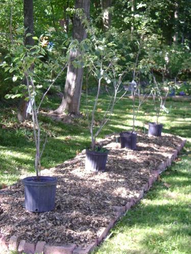 gardenSept09 079