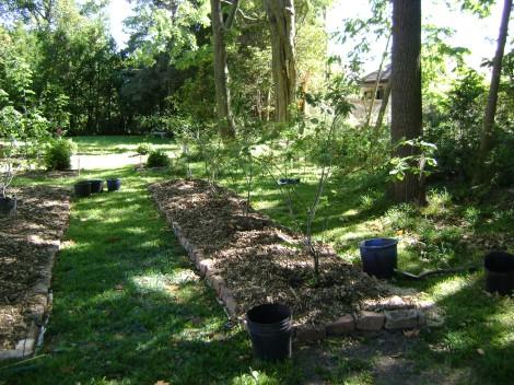 gardenSept09 082