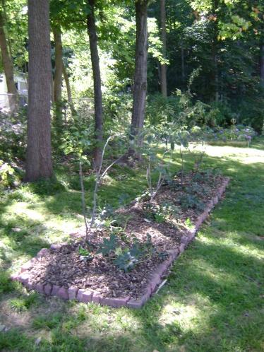gardenSept09 088