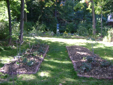 gardenSept09 090
